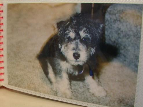 R.I.P. Laptop The Dog (photo circa 1998)